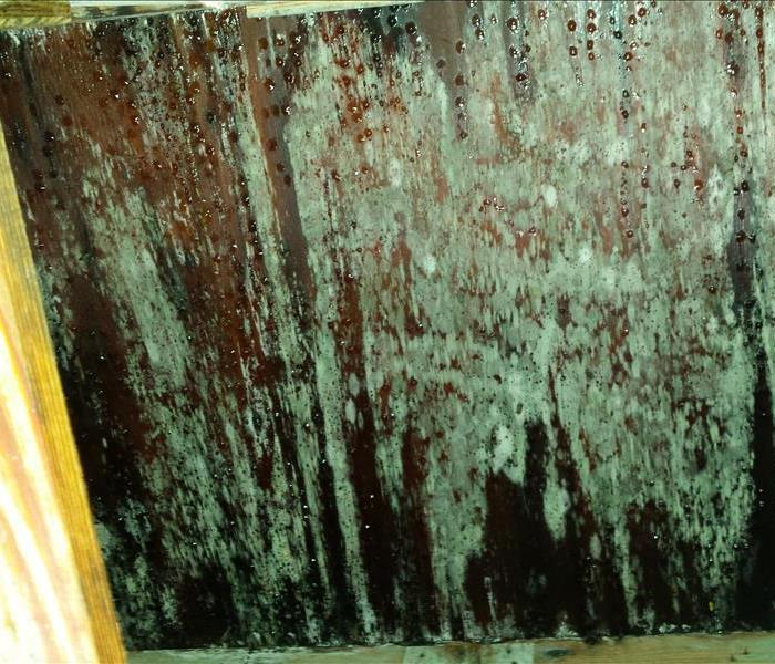 Mold Remediation Does Your Carteret or Onslow County Home Have A Mold Problem?